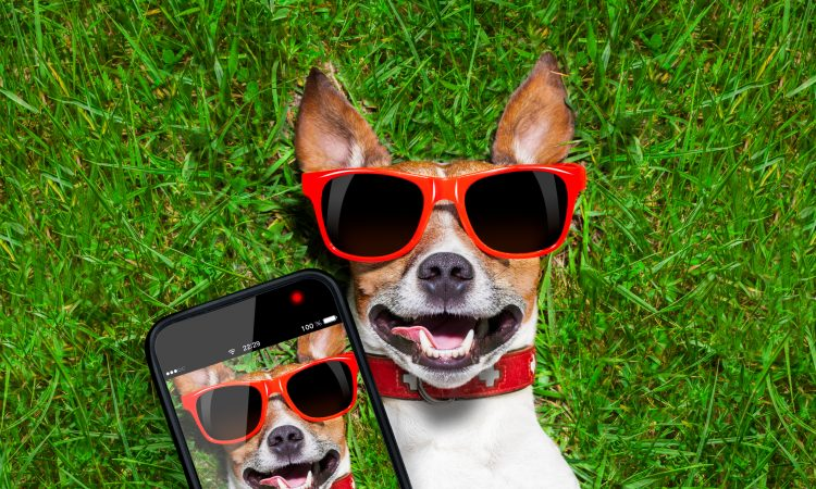 dog enjoying free cell phone service with q link. At Q Link Wireless you can enjoy unlimited data, talk and text.